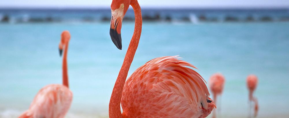 Aruba resorts and hotels  - 2