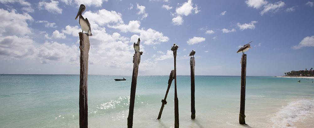 Aruba resorts and hotels  - 1
